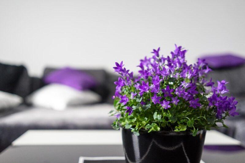fioletowe pokoje